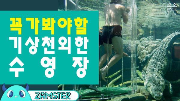 꼭 가봐야할 기상천외한 수영장들 [소소북 55회] #잼스터