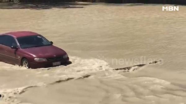 홍수에 잠긴 도로 위, 무시무시한 불청객 등장?!