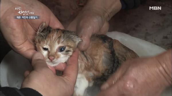 냐옹~ 산속 고양이 목욕법