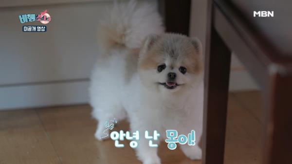 [스페셜 영상] 실검 독식 박기량 강아지, 몽이! 갠소각 영상 대방출