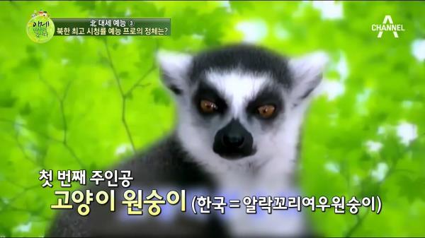 북한판 '동물농장' 최고 시청률 예능프로그램의 정체는?