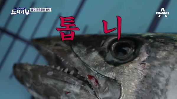 [다음이야기] 파이터 김동현! 몬스터 대삼치의 관자놀이(?)를 노린다!