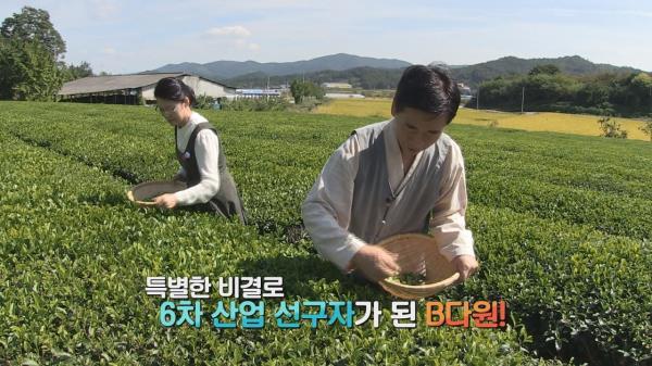 보성, 80년 역사의 차(茶)밭