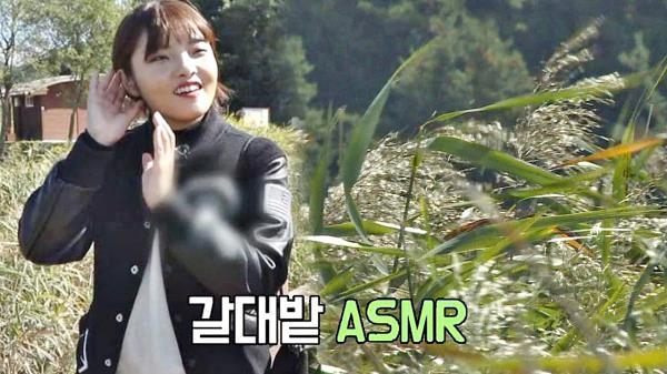 [힐링여행] 순천만 갈대밭이 들려주는 '자연 ASMR'♬