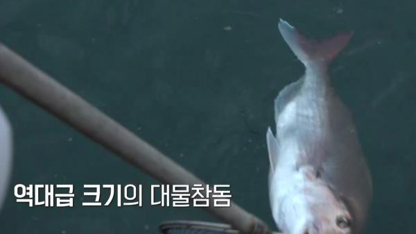 [다음이야기] 이번이 진짜진짜 마지막 참돔 리벤지! 박 프로를 살려줄 대물참돔 등장!