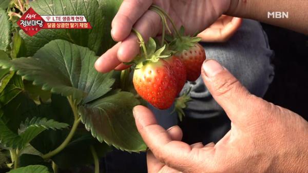 달콤 상큼한 딸기 체험!