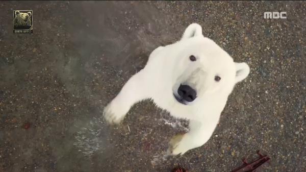 촬영하기엔 너무 영리한 곰들 (feat.돈 물어내!)