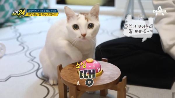랜선집사들 이리오세요~ '벨 치는 고양이' 뽀양이의 매력 발산 TIME♥