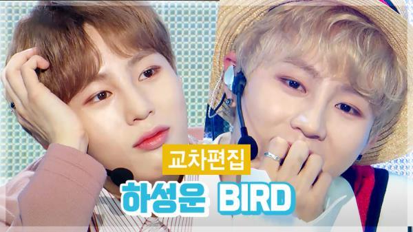 《스페셜X교차편집》 하성운 - BIRD(HA SUNG WOON - BIRD)