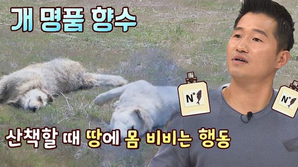 (강아지 상식☞) 강아지의 '명품 향수' = 썩은 생선과 고양이&토끼 변(!)