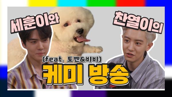 《EXO 세훈&찬열 케미》 우리 토벤이와 비비를 소개합니다(etc. 새로운 애완동물 적응기!)