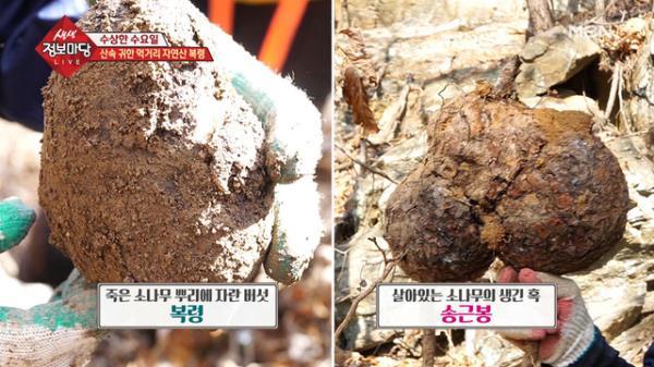 땅을 계속 찌르면 버섯이?