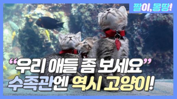 """""""우리 애들 좀 보세요♥"""" 수족관엔 역시 고양이죠^_^"""