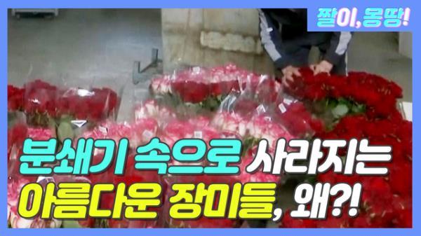 분쇄기 속으로 사라지는 '아름다운 장미들' 왜?!