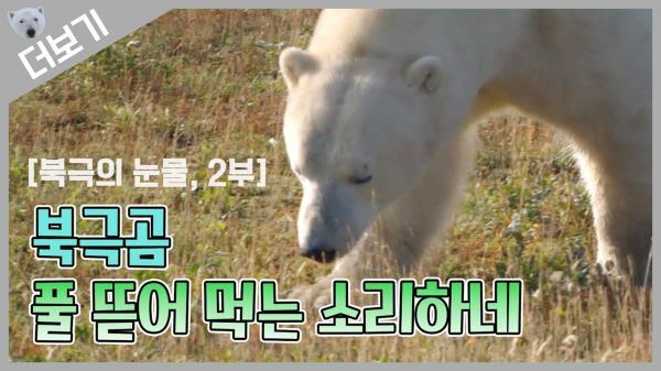 [북극곰 더보기] 어디서 풀 뜯어 먹는 소리 안들려?