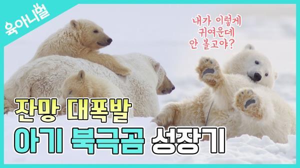 [육아니멀] 귀여워..! 가만히 있어도 귀여워...! 아기 북극곰의 성장기