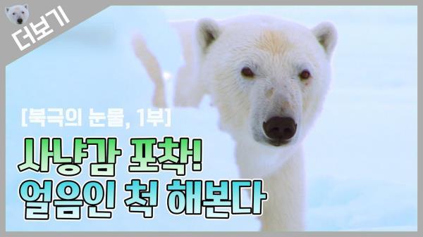 [북극곰 더보기] 드디어 사냥감 포착! 얼음인 척 해본다