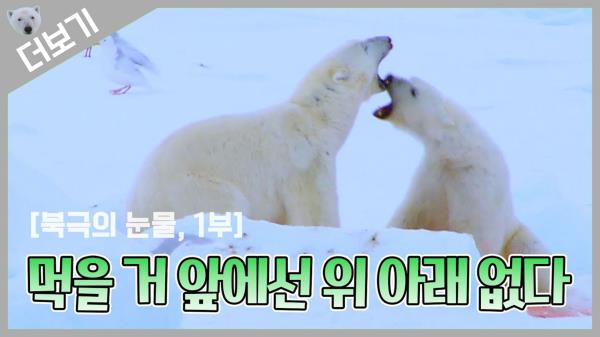 [북극곰 더보기] 아시죠? 먹을 거 앞에선 위 아래 없는 거🤤