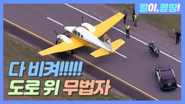 도로를 점령하는 무법자!