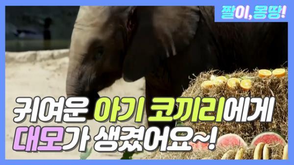 ♡귀여운 아기 코끼리에게 대모가 생겼어요♡
