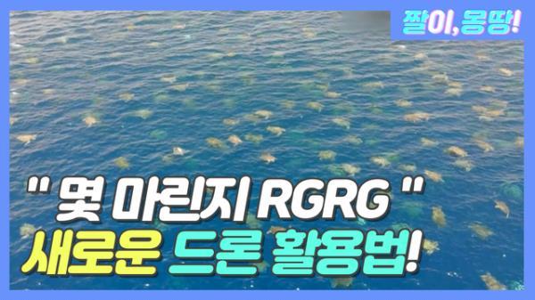 """""""바다거북이 떼 몇 마린지 RGRG"""" 새로운 드론 활용법!"""