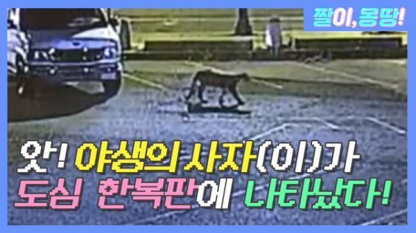 앗! 무서운 사자(이)가 도심 한복판에 나타났다!