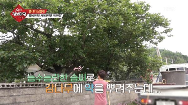 동에 번쩍! 서에 번쩍! 시골 청년 박 반장