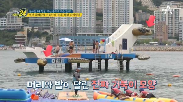 부산 앞바다에 초대형 거북이가 나타났다!?