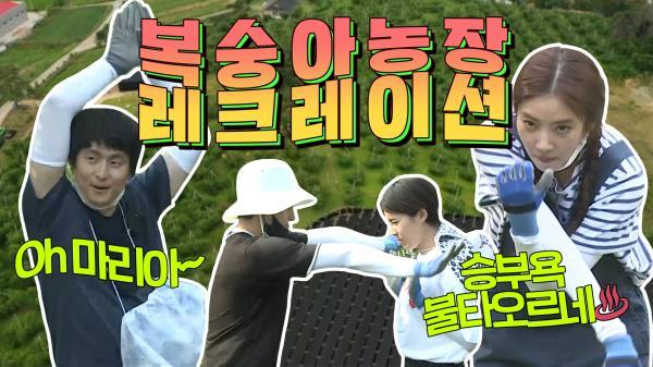 《스페셜》 복숭아 농장 한복판에서 벌어진 ★광란의 댄스파티 & 손뼉 치기★