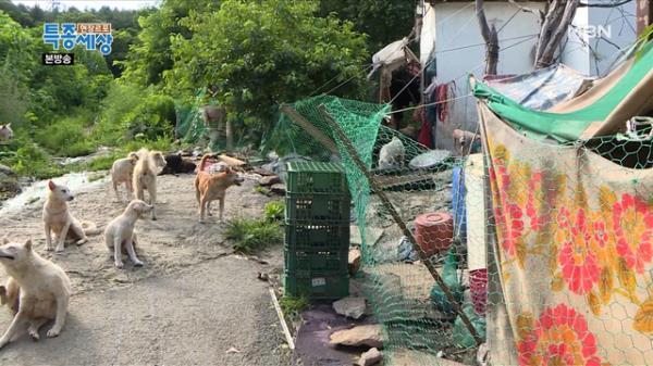 시골마을을 점령한 무법자들이 있다?!