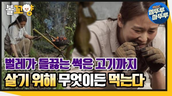 [엠뚜루마뚜루] 썩은 고기까지..?! 무엇이든, 살기 위해 먹는다! #엠뚜루마뚜루 (MBC 200618 방송)