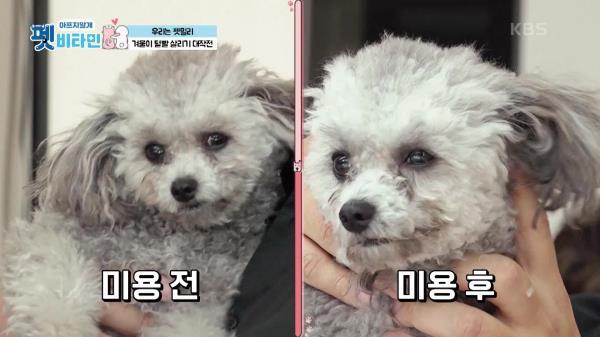 겨울이 털발 살리기 대작전☆   KBS 210114 방송