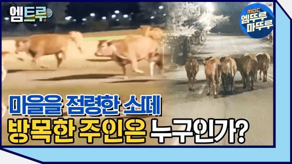 [엠뚜루마뚜루] 사람들을 공포에 떨게 한 소떼는 어디서 온 것인가? #엠뚜루마뚜루 #엠트루 (MBC 210109 방송)