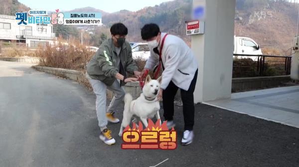 멍중이는 개춘기? 강아지에게도 사춘기가 있나요? | KBS 210114 방송