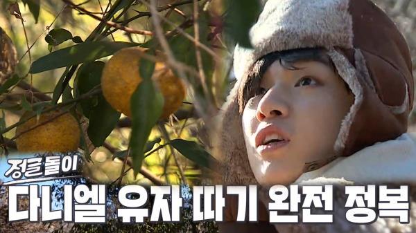 '유자 따기 선수' 강다니엘, 다 차례 유자 공략 끝내 장인 등극!
