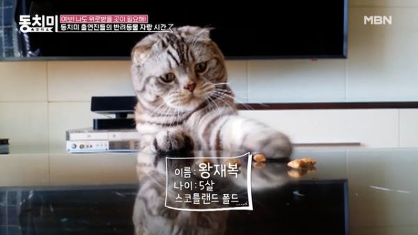 """고양이 별로 돌아간 왕종근의 반려묘 '재복이' """"재복이를 살릴 수 있다면 내 모든 걸 다 바치겠어요"""" MBN 210508 방송"""